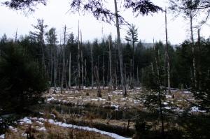 JPEG Image (5042)