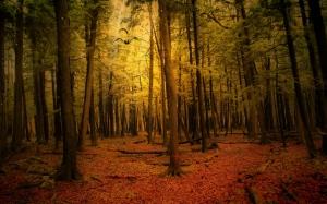 dark-wood-forest-road-winter-autumn-landscape-713482